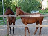 2014 год-год лошади