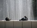 Голубки у фонтана