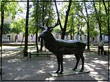 Олень в парке Блонье
